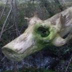 Cow Tree
