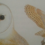 The Aspect of an Owl