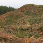 The Hillfort